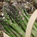 Cashman Nursery, Bismarck, ND, Purple Passion Asparagus