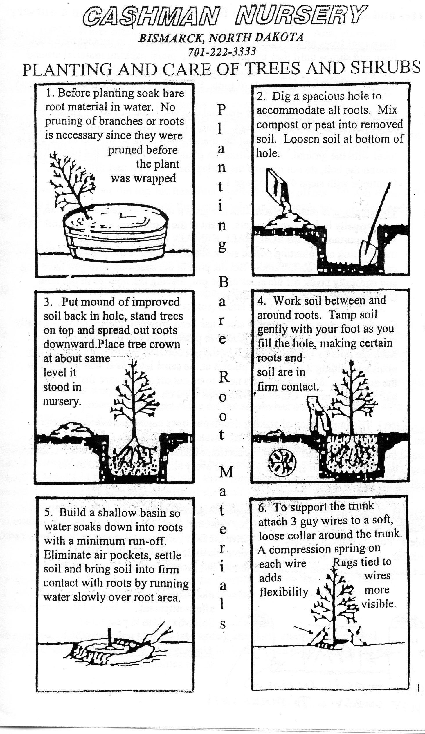 Cashman Nursery   Bare Root