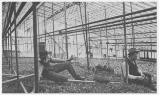Cashman Nursery early 1900s