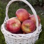 Cashman Nursery, Bismarck, ND, Fireside Apple Fruit Tree